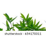 bamboo leaves | Shutterstock . vector #654170311