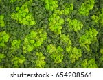 Wall Decoration With Moss. Mos...