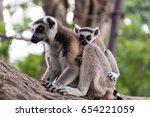lemurs on tree | Shutterstock . vector #654221059
