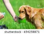 female hand gives a golden... | Shutterstock . vector #654258871