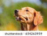 picture of a golden retriever... | Shutterstock . vector #654263959