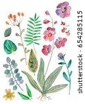 botanical illustration ... | Shutterstock . vector #654285115