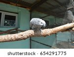 Small photo of African gray parrot sits on a perch in the aviary of a zoo