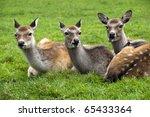 Park Kadzidlowo Three Deer