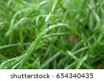 Green Grass With Rain Drops In...