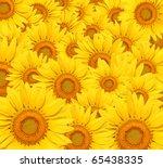 Sunflower Background.