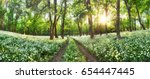 panorama of forest green... | Shutterstock . vector #654447445