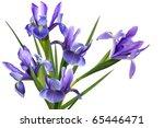 Bundle Blue Iris Flower...