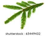 spruce twig | Shutterstock . vector #65449432