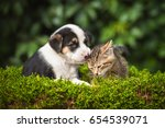 Friendship Of Little Puppy Wit...