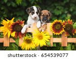 Stock photo two adorable puppies looking over the garden fence 654539077