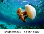 Jellyfish Found At Coral Reef...
