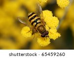 A Black And Yellow Hover Fly O...
