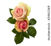 beautiful roses   isolated on... | Shutterstock . vector #65461369