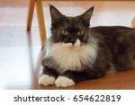 dark grey cat selective focus | Shutterstock . vector #654622819