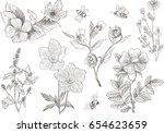 vintage botanical illustration... | Shutterstock .eps vector #654623659