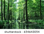 in the spree forest germany | Shutterstock . vector #654643054