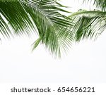green leave of coconut palm... | Shutterstock . vector #654656221