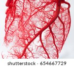 blood vessel system of an heart | Shutterstock . vector #654667729