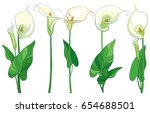 vector set with calla lily... | Shutterstock .eps vector #654688501