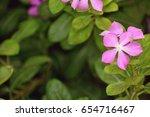 pink flowers | Shutterstock . vector #654716467