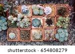 succulents in diy concrete pot. ...   Shutterstock . vector #654808279