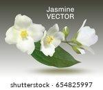 jasmine flower vector...   Shutterstock .eps vector #654825997