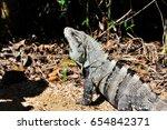 mexican lizard under sun light | Shutterstock . vector #654842371