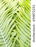Small photo of Fern polypody adder's tongue plant abstract background, texture
