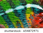 Panther Chameleon Skin Close U...
