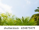 palm trees against blue sky ... | Shutterstock . vector #654875479