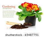 Flowerpot With Red Flowers And...
