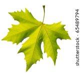Gold One Maple Leaf Isolated O...