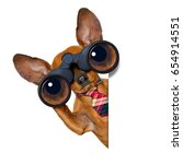Stock photo dachshund or sausage dog binoculars searching looking and observing with care isolated on white 654914551