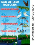 basic wetland food trophic... | Shutterstock .eps vector #654924649