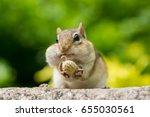 Chipmunk Stuffing Nuts Inside...