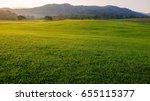 singha park  boon rawd farm  ... | Shutterstock . vector #655115377