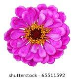 zinnia elegans isolated on... | Shutterstock . vector #65511592