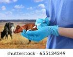 veterinarian holding syringe... | Shutterstock . vector #655134349