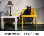 Stock photo black cat black cat with butterfly on the neck 655147789