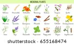 big vector set of medicinal... | Shutterstock .eps vector #655168474
