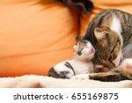 Stock photo kitten w mom 655169875
