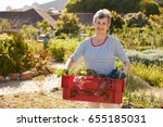 mature woman carrying crate of... | Shutterstock . vector #655185031
