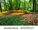 Amazing Blooming Tulips In The...