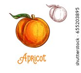apricot fruit sketch. vector... | Shutterstock .eps vector #655203895