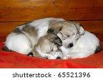 Two Sleeping Puppies Uncommon...