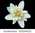 a close up of the flower... | Shutterstock . vector #655244131