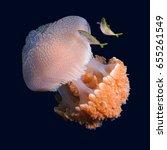 jellyfish   Shutterstock . vector #655261549