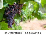 vine with clusters of black... | Shutterstock . vector #655263451