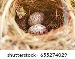 Two Bulbul Eggs In Nest